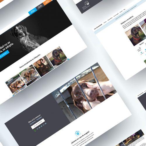 Portal Web adopción perros ONG